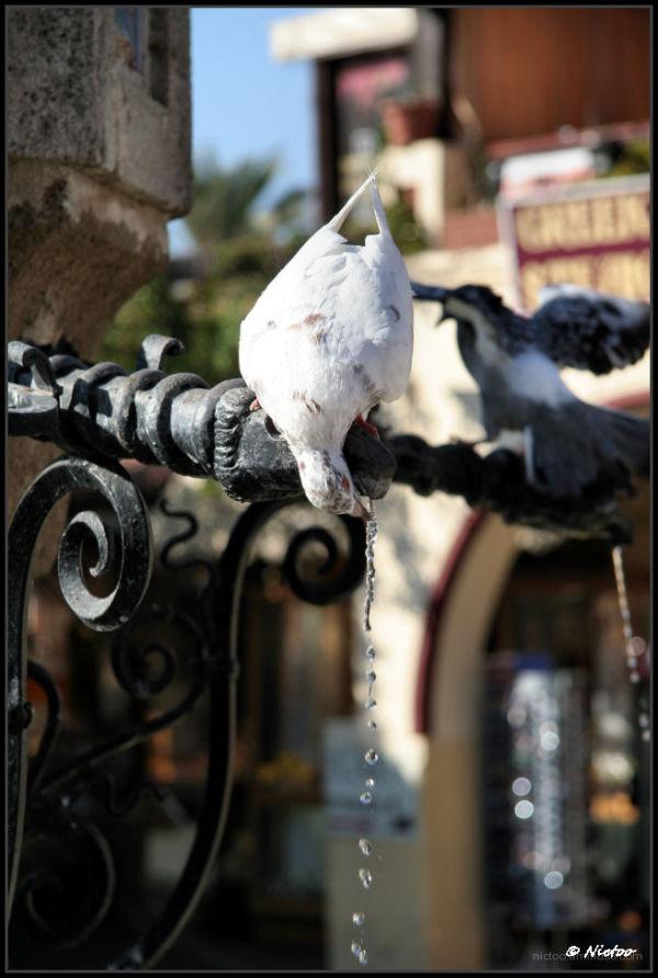 L'eau c'est la vie...elle est pour tout le monde