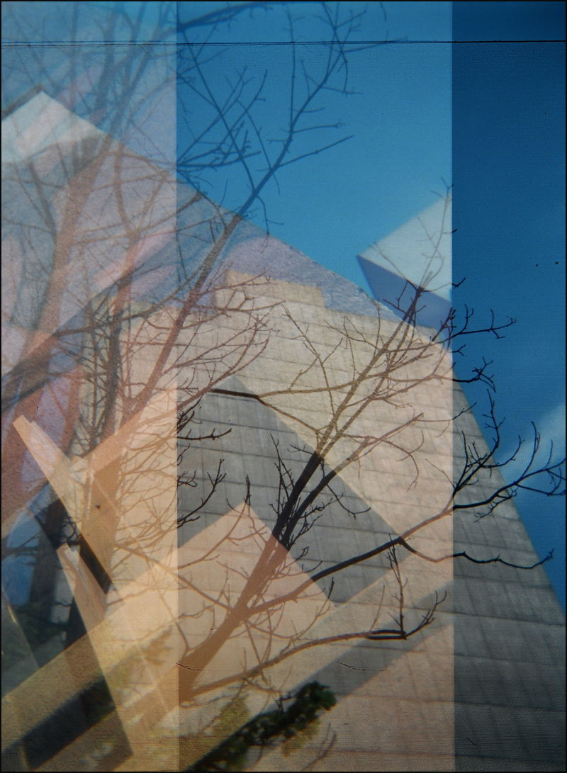 Holga Montreal Concordia tree