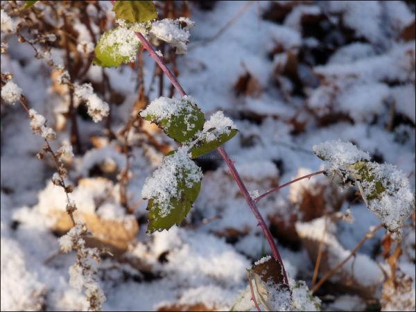 Vermont rural snow