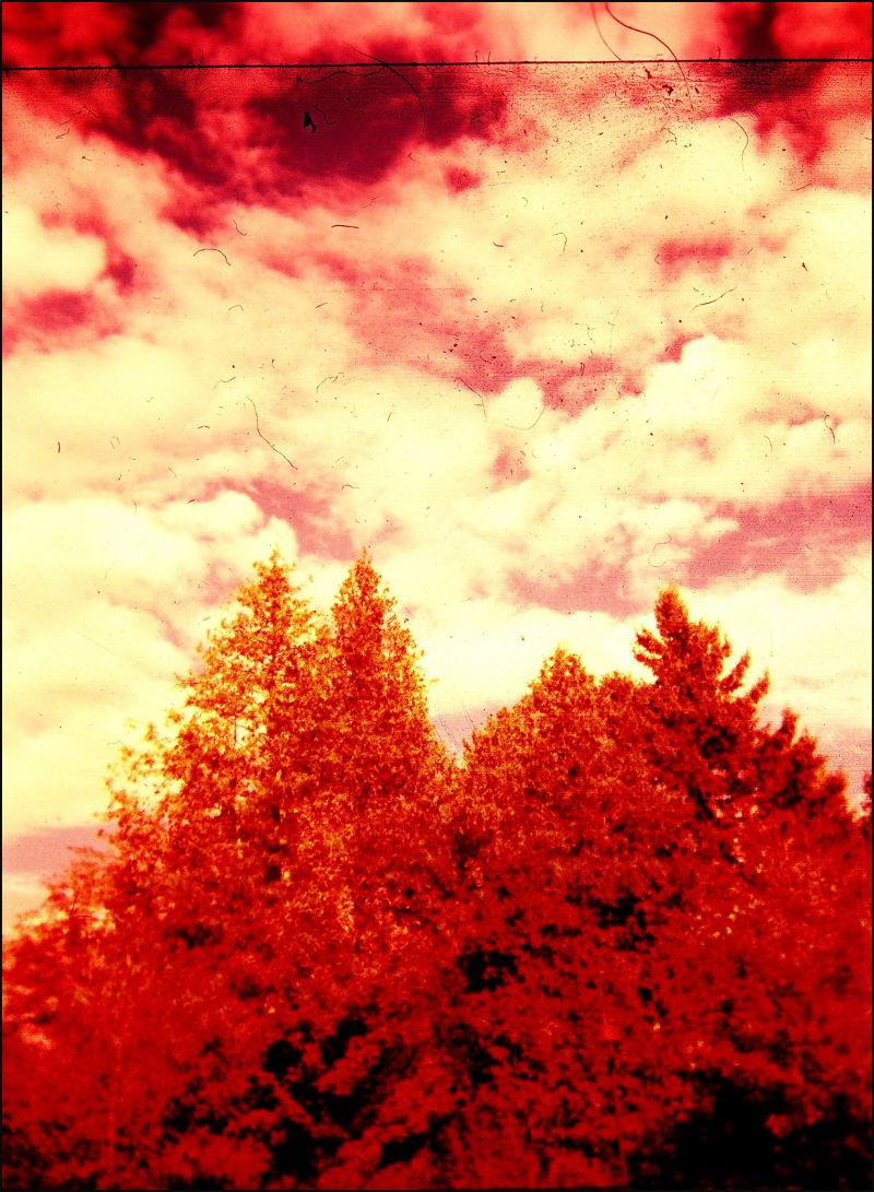 Holga 120 Velvia Vermont trees x-pro