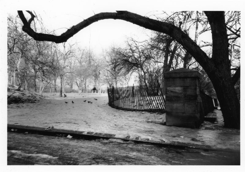 old tree in city park