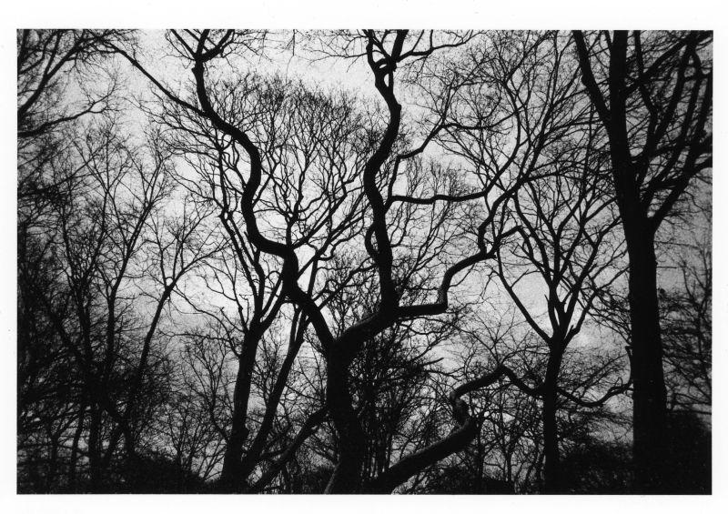 park trees in rain