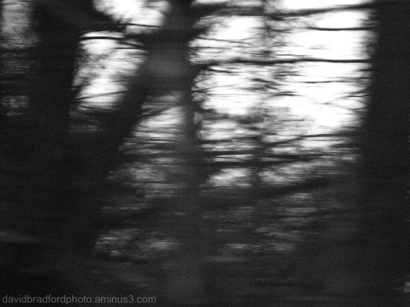trees flashing by