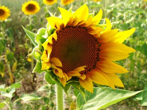 Soleil en Provence