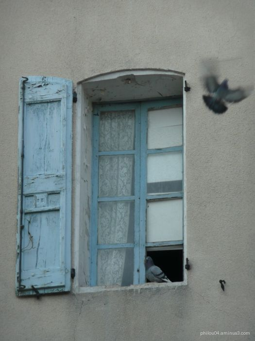 Pigeon loft ?