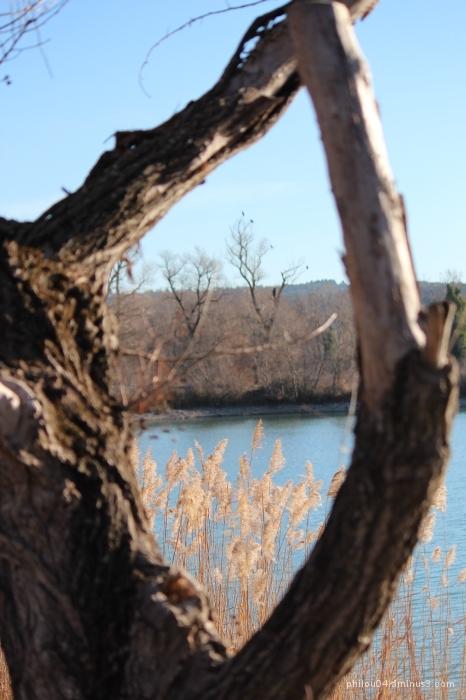 Le lac entre les branches