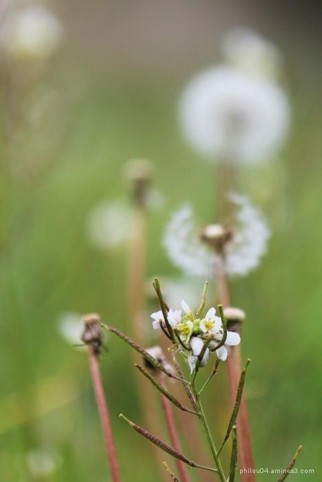 Les fleurs du Jardin (3)