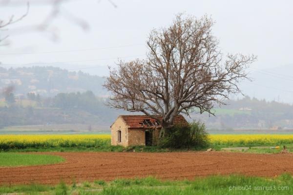 L'arbre qui cache la maison