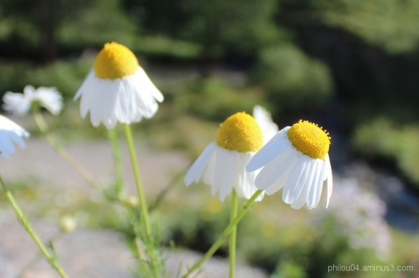 Fleur ou volant de badminton ?