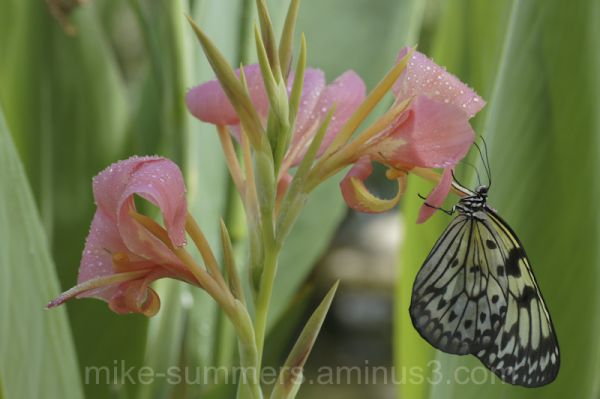 Butterfly rests on flower