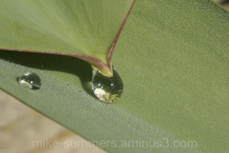 Raind drop from leaf