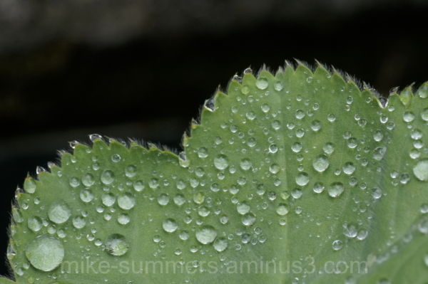 Dew drops scattered