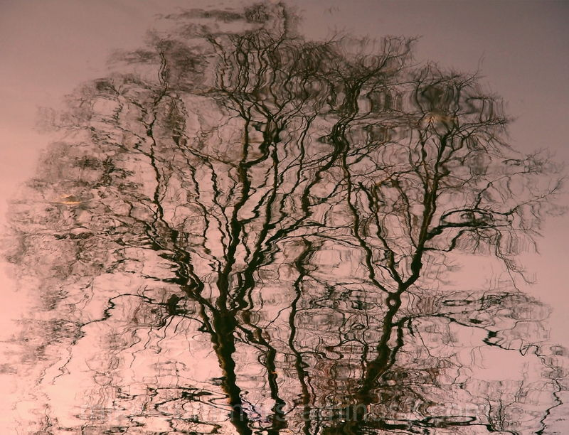 Winter tree reflected in water
