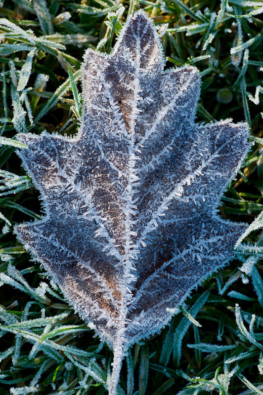 Ice on dead leaf