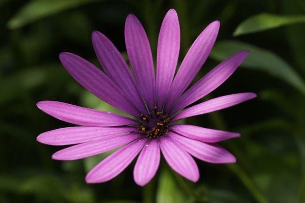 Pink flower sun
