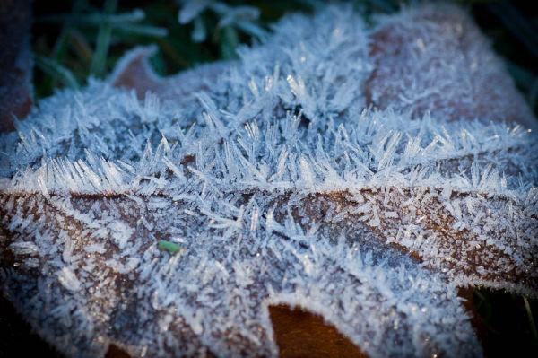 Frosty #2