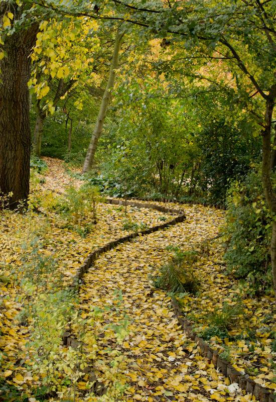 A path through Autumn leaves