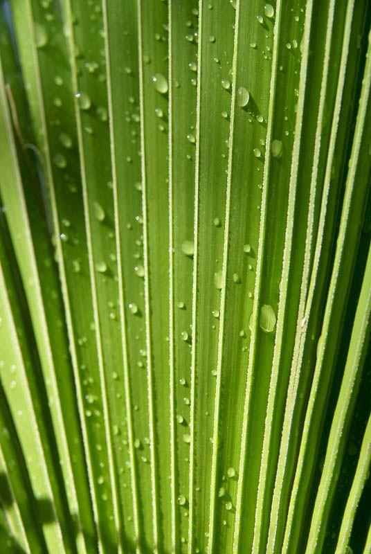 Palm leaves sun shade