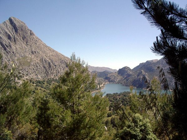 Planta de Gorg Blau Mallorca Spain