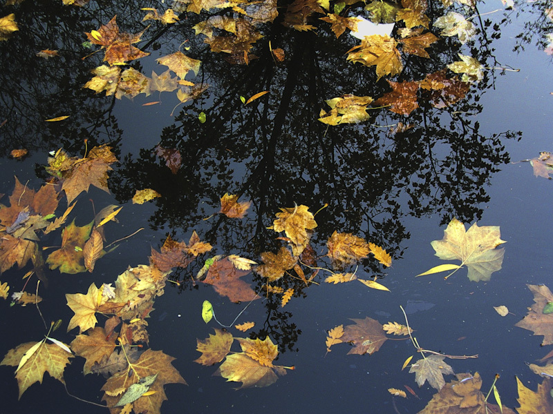 Autumn leaves on water reflection
