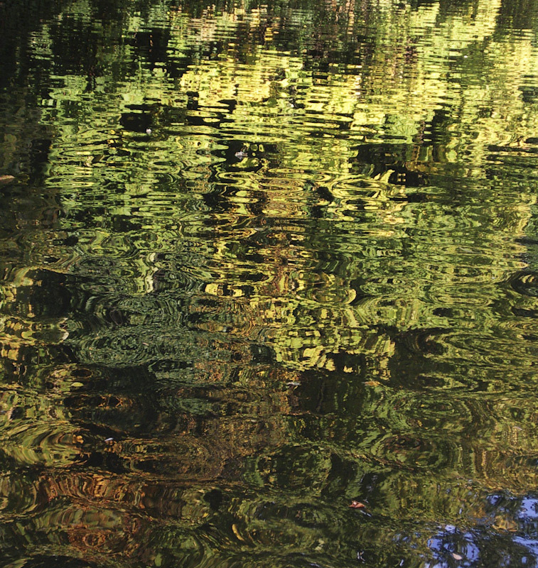 reflection in water of trees