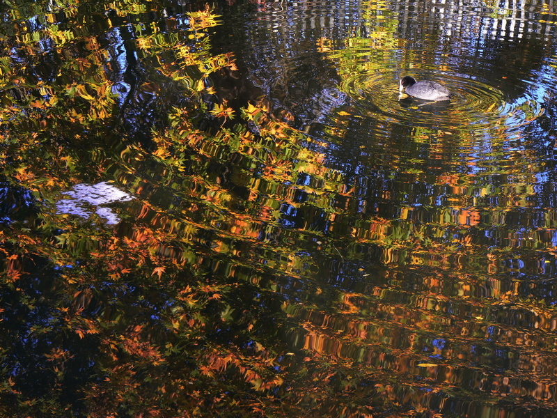 water reflection with autumn leaves
