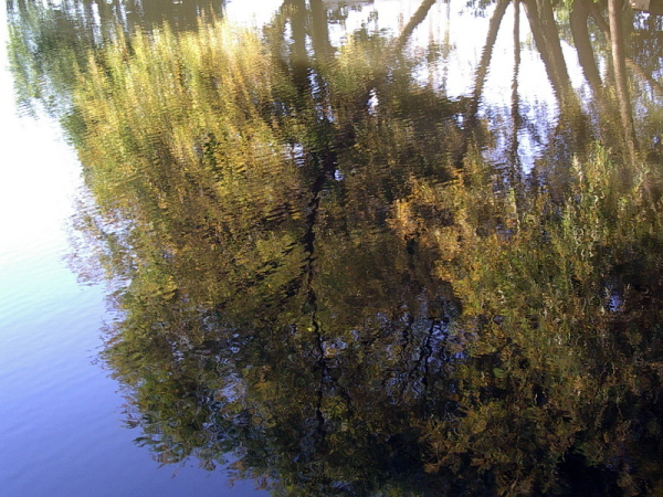 water reflection trees