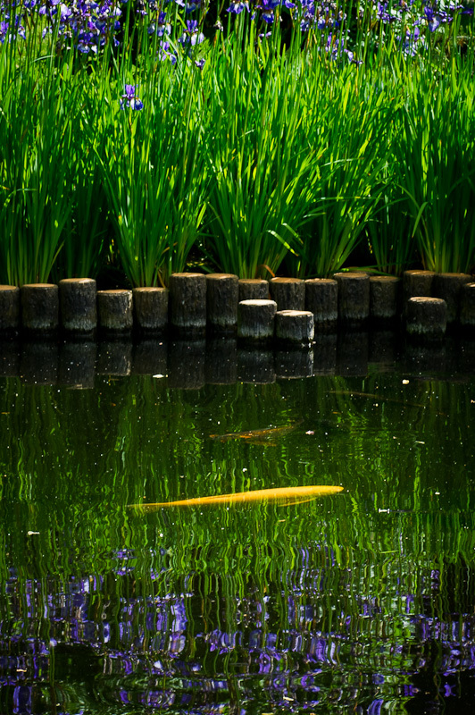 carp float by reeds