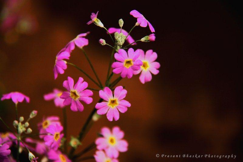 Flowers always bring smiles...