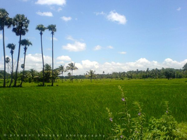 Rich and green countryside...