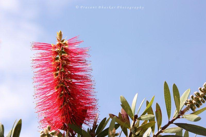 Magnificent Flora - 01
