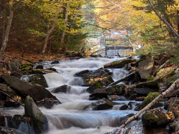 Algonquin leaves Autumn stream rocks rapids dam