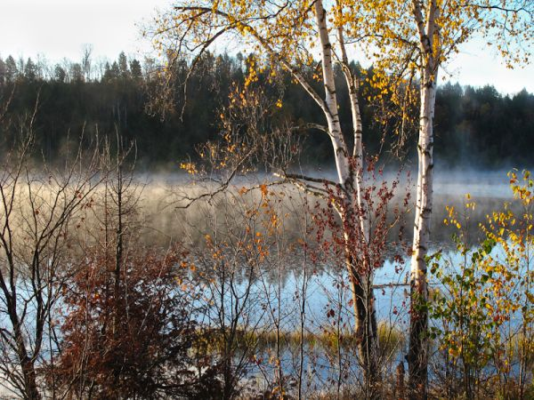 Algonquin Autumn lake morning mist colour Ontario