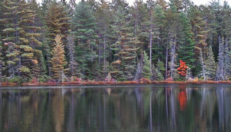 Algonquin Autumn lake woods trees Ontario
