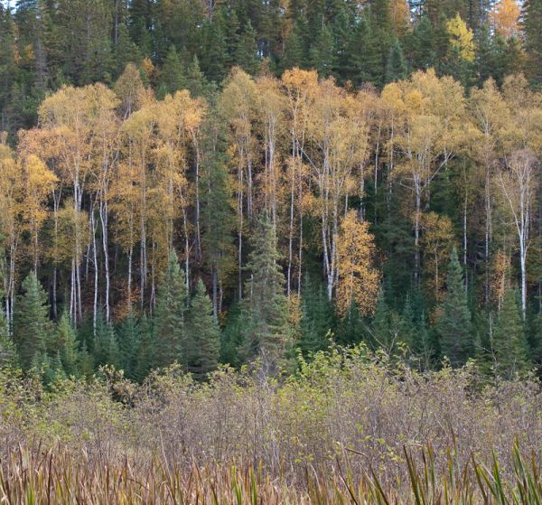 Algonquin Autumn colours woods forest Ontario
