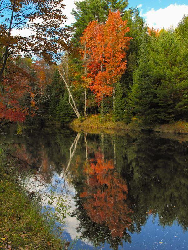 Kawarthas, Autumn, colours, trees, leaves,