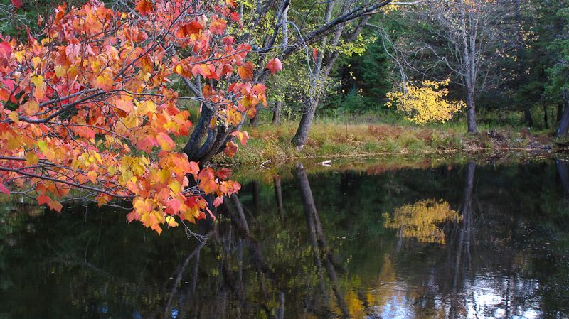 Kawarthas, Autumn, colours, leaves, reflection