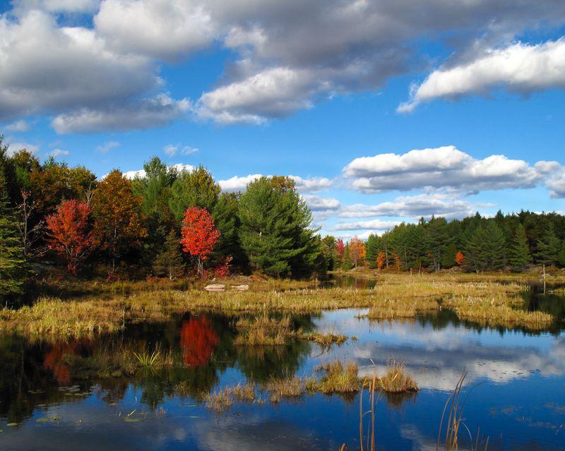 Kawarthas, Autumn, colours, leaves, reflection