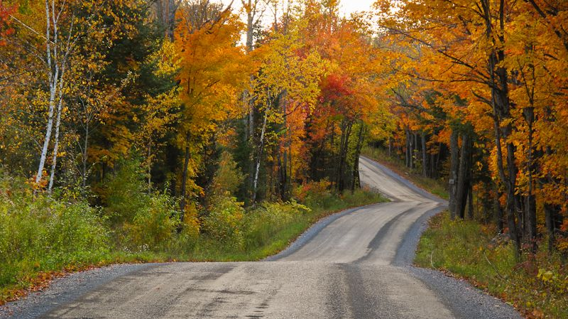 Kawarthas, Autumn, colours, trees, leaves, road