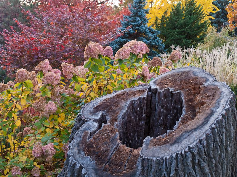 """""""High Park"""" Autumn Colours leaves stump"""
