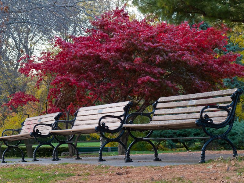 """""""High Park"""" Toronto Autumn Colours benches red"""