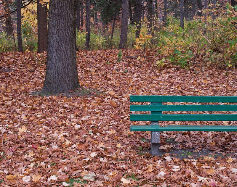 """High Park"" Toronto Autumn Colours benches oak"
