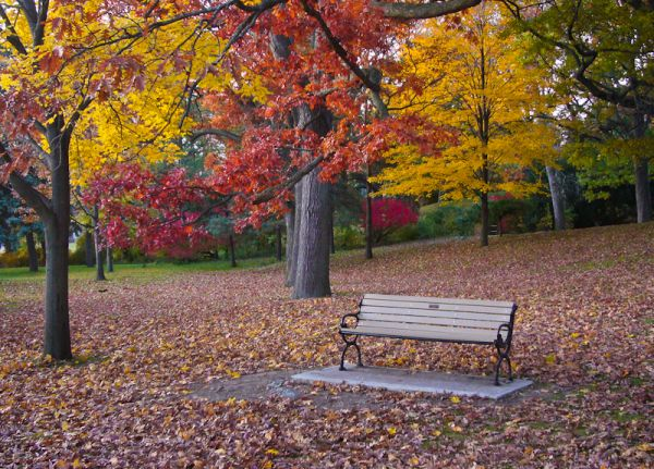 """High Park"" Toronto Autumn Colours bench red"