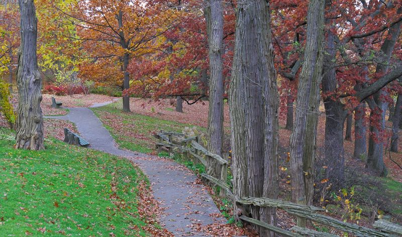 """High Park"" Toronto Autumn Colours bench oak"