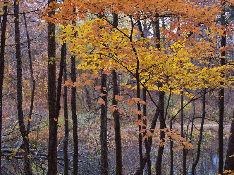 """High Park"" Toronto Autumn Colours leaves trees"