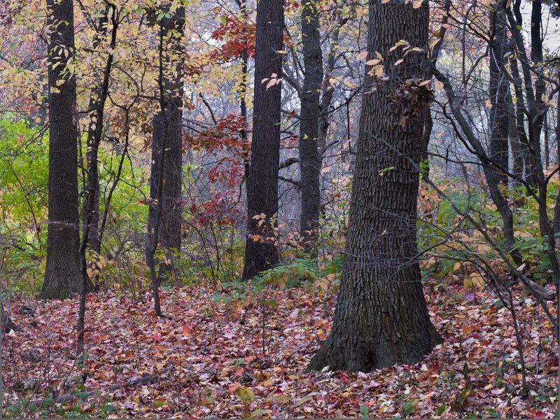 """High Park"" Toronto Autumn Colour trees Leaves"