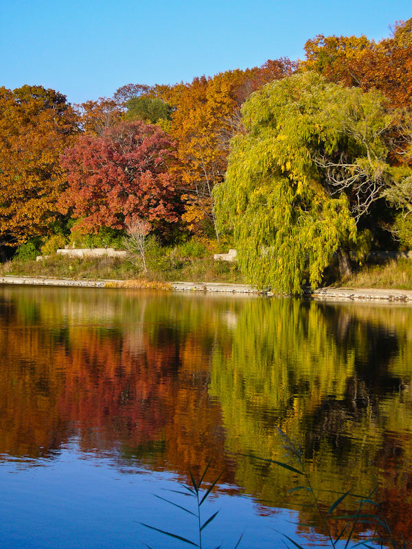 """High Park"" Toronto Autumn willow reflection"