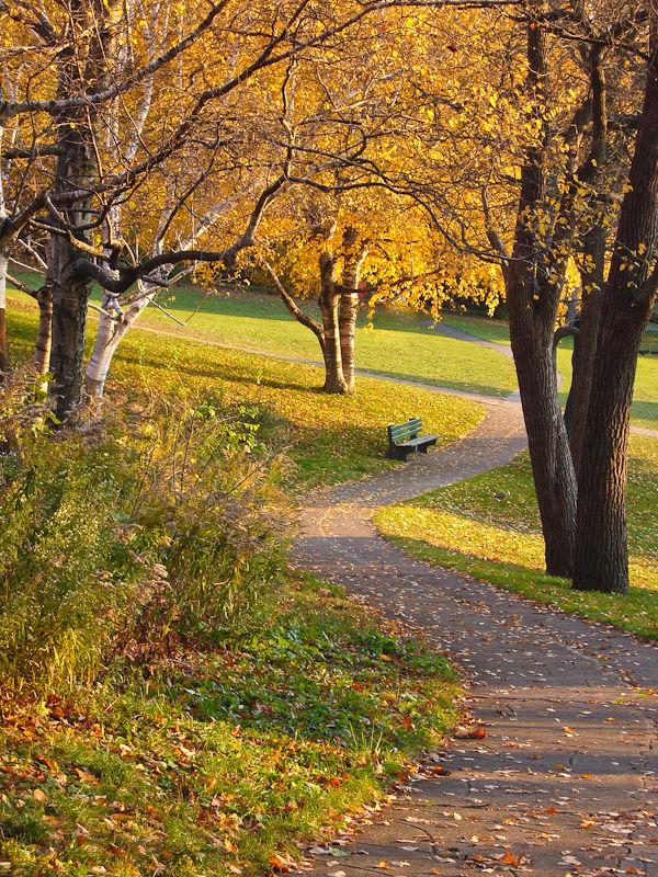 """High Park"" Toronto Autumn Colour leaves bench"