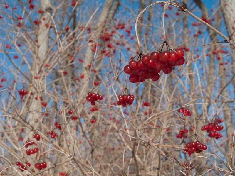 "Toronto ""Toronto Islands"" Winter cold fruit"