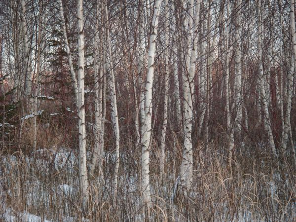 "Toronto ""Toronto Islands"" Winter snow trees"